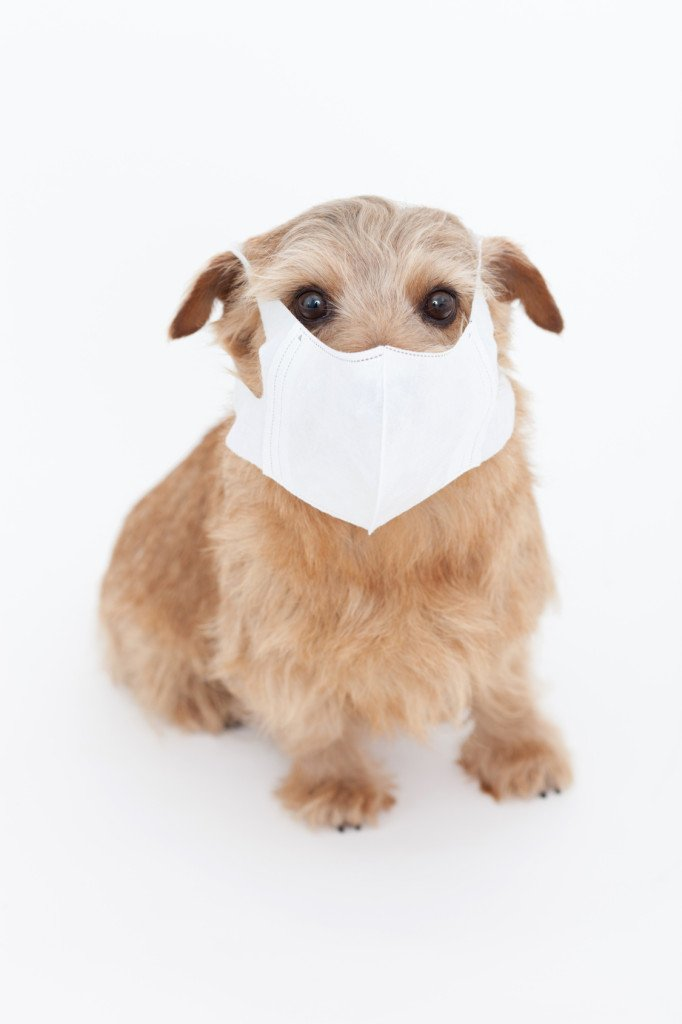 Pet Allergies Dog with Mask
