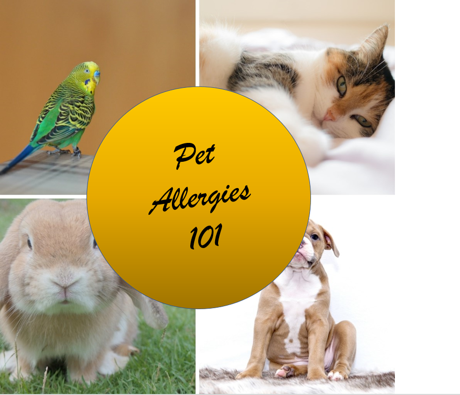 Pet allergies 101